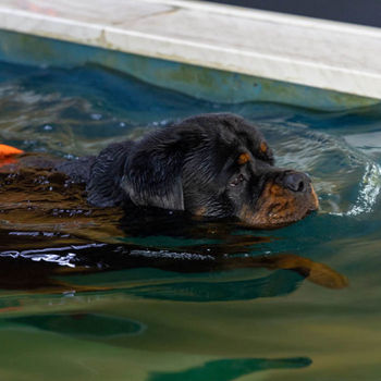 Dierencentrum FysOs - Hondenzwembad