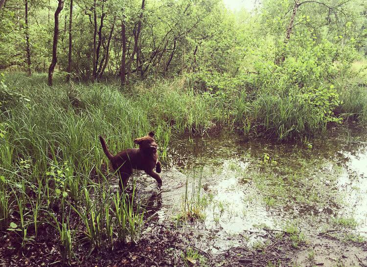 Je hond buiten laten zwemmen… Een goed idee bij artrose?